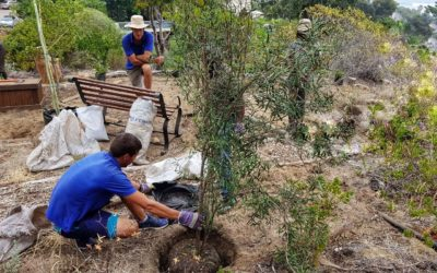 100 New Trees at Camps Bay Retreat