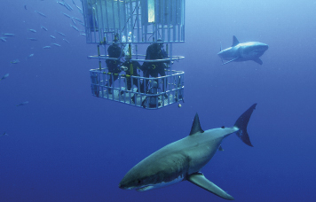 Village n Life Tours - Shark Cage Diving