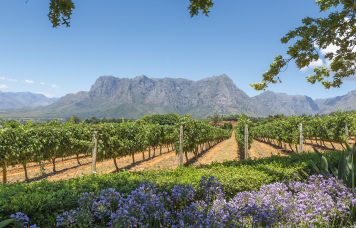 Village n Life Tours - Cape Winelands